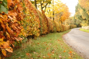 autumn-lane-1244920-m
